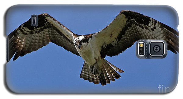 Osprey In Flight Galaxy S5 Case