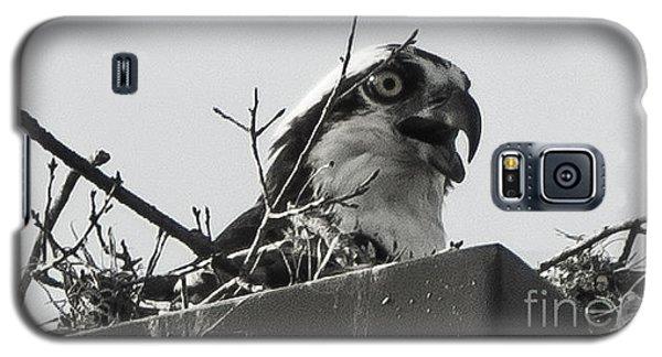 Osprey In Nest Galaxy S5 Case