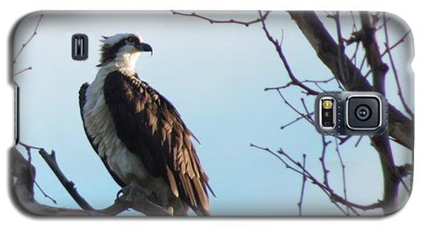 Osprey In Tree Galaxy S5 Case