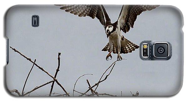 Osprey Landing Galaxy S5 Case