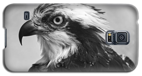Osprey Monochrome Portrait Galaxy S5 Case by Chris Flees