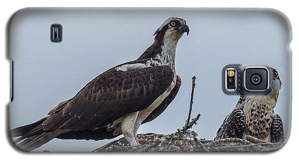 Osprey On A Nest Galaxy S5 Case by Paul Freidlund