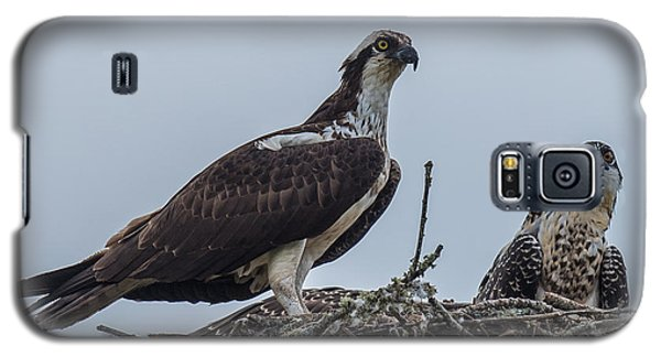 Osprey On A Nest Galaxy S5 Case