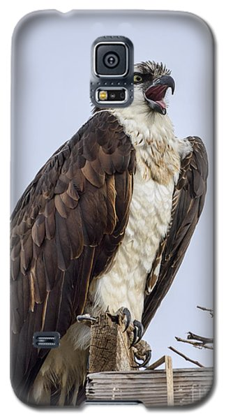 Galaxy S5 Case featuring the photograph Osprey On Its Perch by Eddie Yerkish
