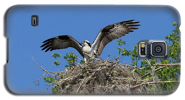 Osprey On Nest Wings Held High Galaxy S5 Case