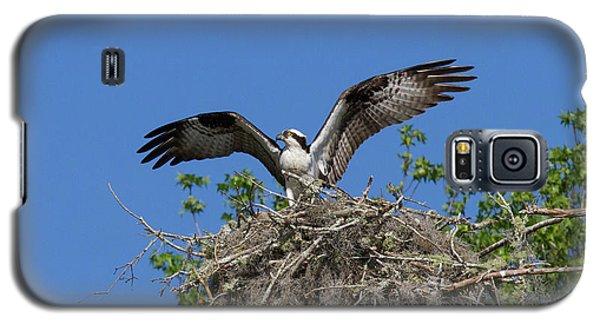 Osprey On Nest Wings Held High Galaxy S5 Case
