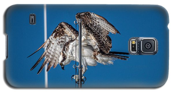 Osprey On The Boat Rod Galaxy S5 Case by Dorothy Cunningham
