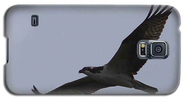 Osprey On The Tygart Galaxy S5 Case