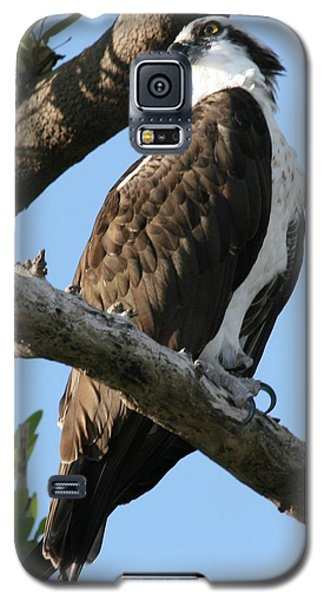 Galaxy S5 Case featuring the photograph Osprey - Perched by Jerry Battle