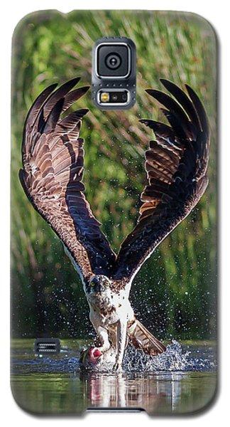 Osprey Galaxy S5 Case - Osprey - Strike by Pat Speirs