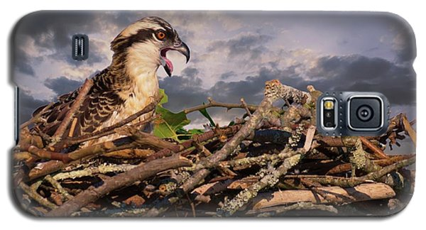 Osprey Talk Galaxy S5 Case