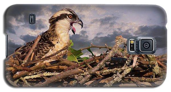 Osprey Talk Galaxy S5 Case