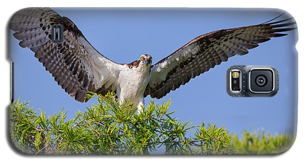 Osprey With Wide-open Wings Galaxy S5 Case