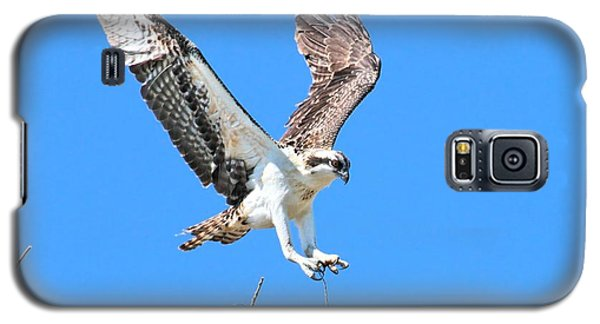 Ospreys Learning To Fly Galaxy S5 Case
