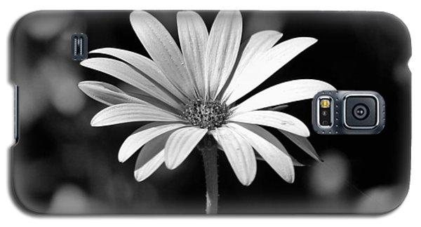 Osteospermum  Galaxy S5 Case