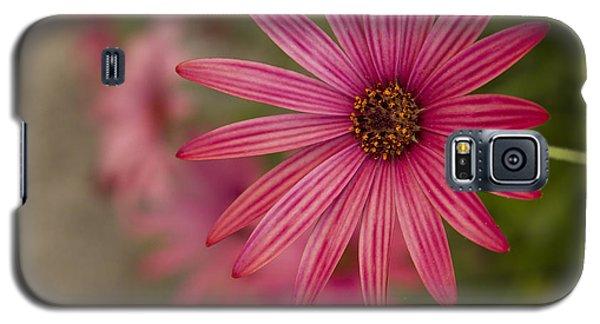 Osteospermum The Cape Daisy Galaxy S5 Case by Shirley Mitchell