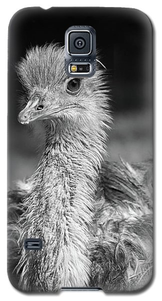 Ostrich Black And White Galaxy S5 Case