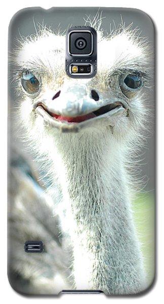 Ostrich Grin Galaxy S5 Case