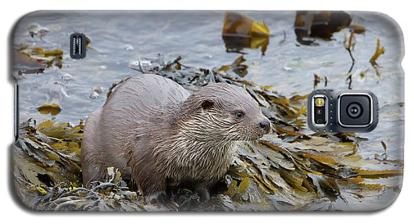 Otter On Seaweed Galaxy S5 Case