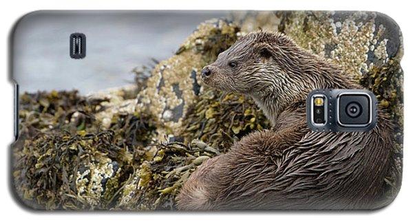 Otter Relaxing On Rocks Galaxy S5 Case