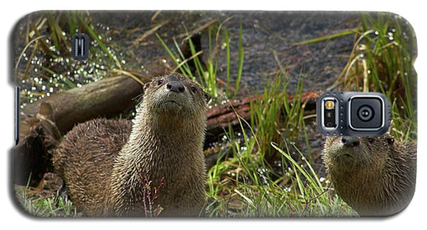 Galaxy S5 Case featuring the photograph Otters by Steve Stuller