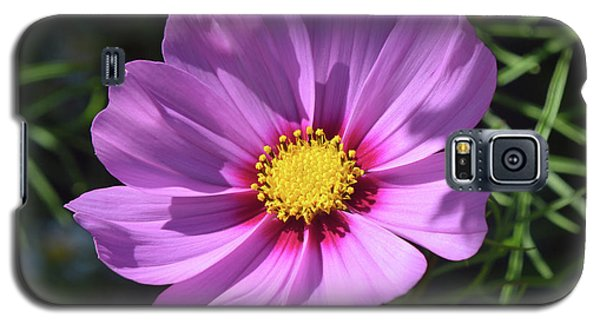 Galaxy S5 Case featuring the photograph Out In The Sun. by Terence Davis