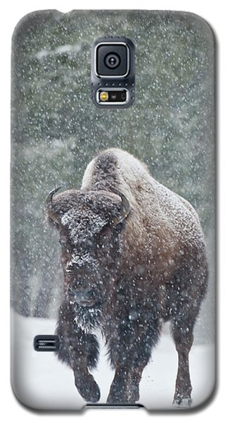 Out Of The Snow Galaxy S5 Case