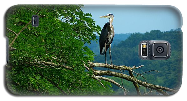 Out On A Limb Galaxy S5 Case by Donald C Morgan