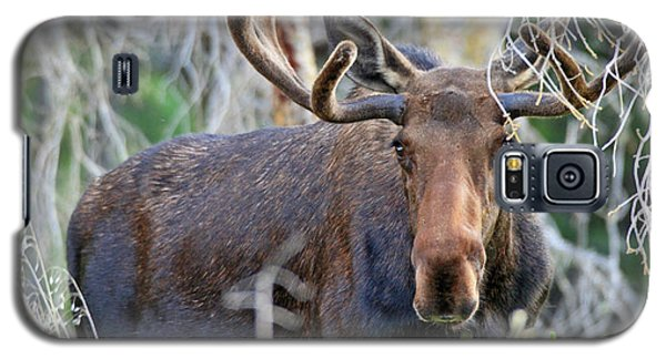 Galaxy S5 Case featuring the photograph Overlooking Moose by Scott Mahon