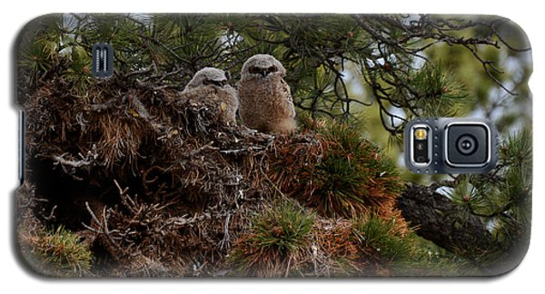 Owl Babies Rocky Mountain National Park  Galaxy S5 Case