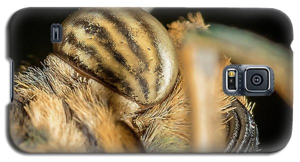 Owl Butterfly  Close Up Galaxy S5 Case