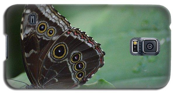 Owl Butterfly Galaxy S5 Case