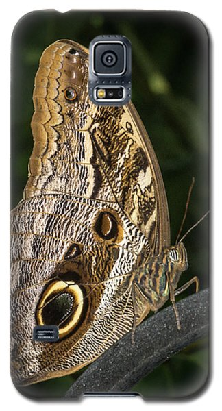 Owl Butterfly Galaxy S5 Case