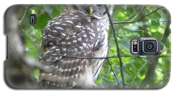 Galaxy S5 Case featuring the photograph Owl On A Limb by Donald C Morgan
