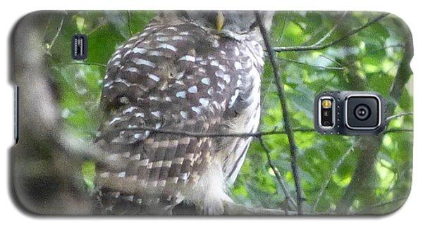 Owl On A Limb Galaxy S5 Case by Donald C Morgan