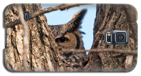 Owl Peek Galaxy S5 Case by Steve Stuller