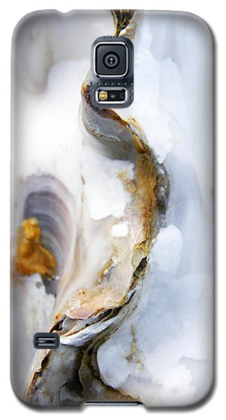 Oyster Galaxy S5 Case by Richard George
