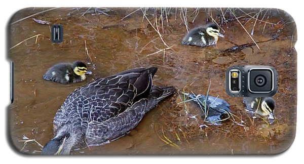 Galaxy S5 Case featuring the photograph Pacific Black Duck Family by Miroslava Jurcik
