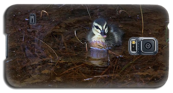 Galaxy S5 Case featuring the photograph Pacific Black Duckling by Miroslava Jurcik