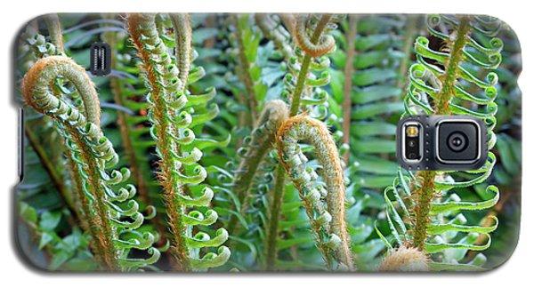 Pacific Ferns Galaxy S5 Case