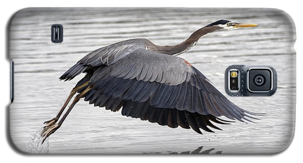 Pacific Great Blue Heron On Lift Off Galaxy S5 Case