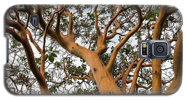 Pacific Madrone Trees Galaxy S5 Case