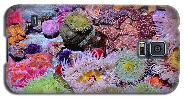 Pacific Ocean Reef Galaxy S5 Case by Kyle Hanson