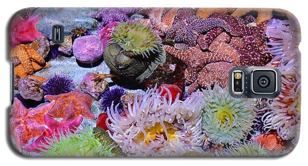 Pacific Ocean Reef Galaxy S5 Case