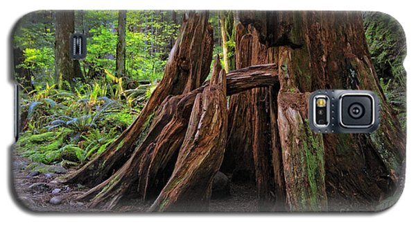 Pacific Rainforest Old And New Galaxy S5 Case by Charline Xia