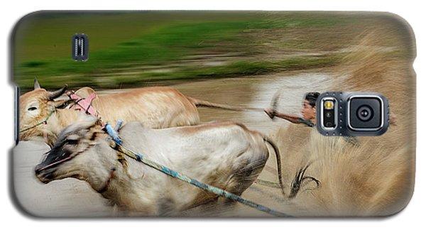 Pacu Jawi Bull Race Festival Galaxy S5 Case