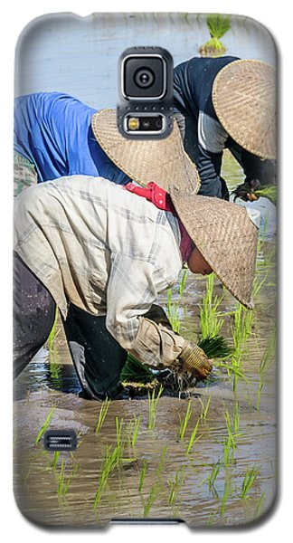 Paddy Field 2 Galaxy S5 Case by Werner Padarin