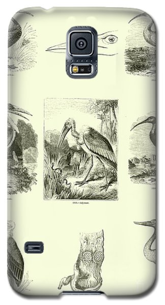 Page From The Pictorial Museum Of Animated Nature  Galaxy S5 Case by English School