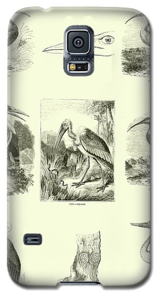 Page From The Pictorial Museum Of Animated Nature  Galaxy S5 Case