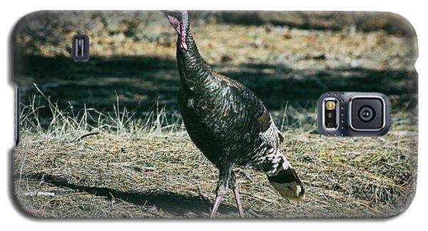 Pagosa Wild Turkey Galaxy S5 Case